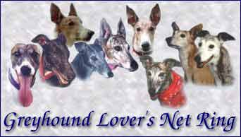 greyhound lover's net ring